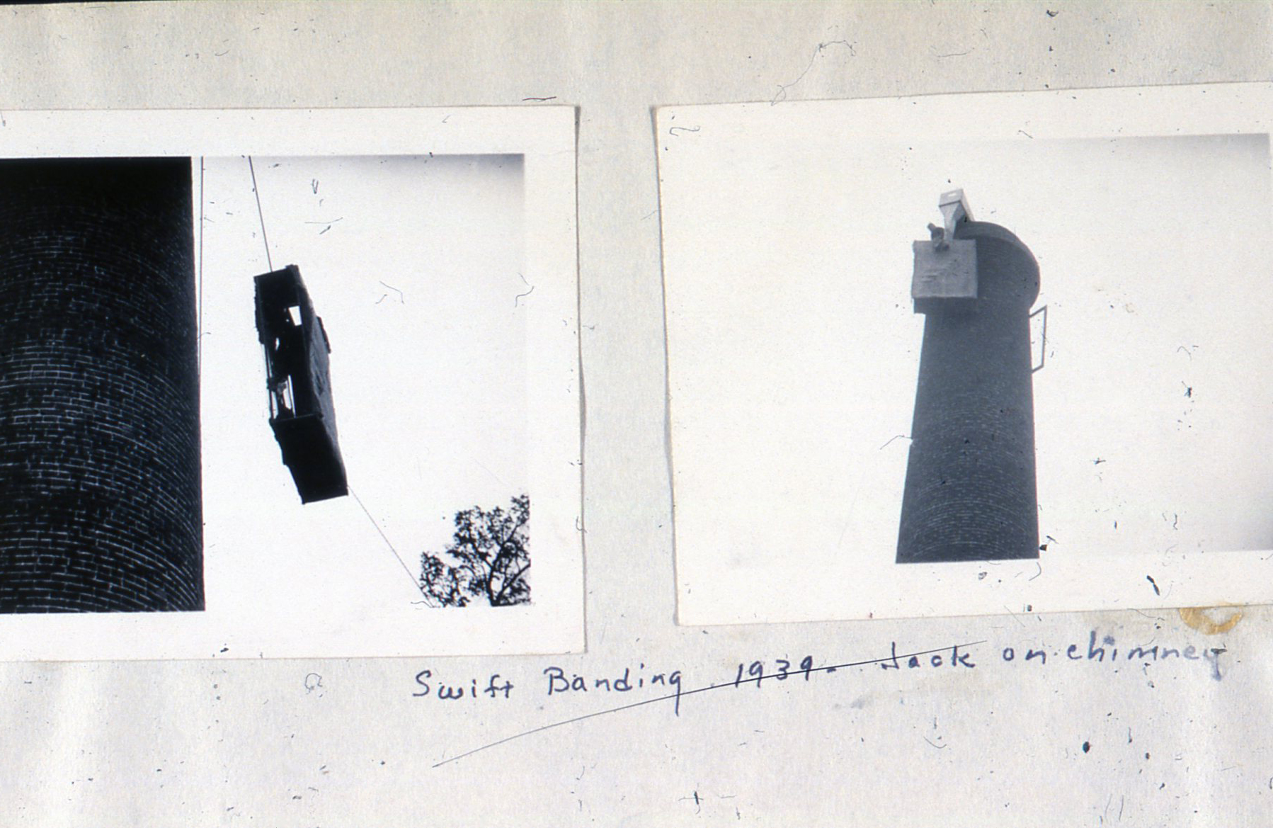 8 Swift banding 1939 - Jack on chimmney